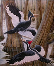 Extinctwoodpecker
