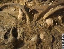 WhaleFossil