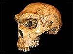 HomoHeidelbergensis